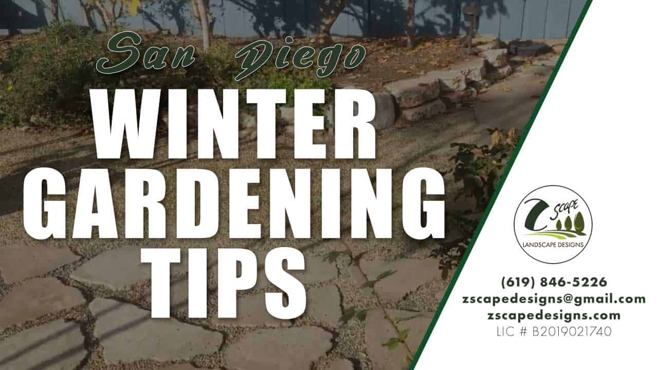 Winter Gardening Tips for San Diego Winters